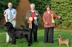 Cally wins Best in Show