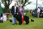BEST VETERAN IN SHOW AT EMERALD ISLE NEWFOUNDLAND CLUB SHOW 2011