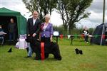 CALLY WINS RESERVE BEST IN SHOW AT EMERALD ISLE NEWFOUNDLAND CLUB SHOW 2011