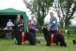 Pals winning at Emerald Isle Club show 2011  ..Margaret with gorgeous Duncan, Michael Western with our showgirl Cally and our friend Sue Lloyd-Denman (judge)