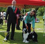 BEST IN SHOW WAS TIBETAN TERRIER - ANDREW-TEMPEST - SHAMISHA SOMETHING SPECIAL FOR MIKUDI